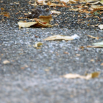 manteau de feuilles